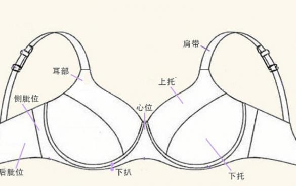 内衣结构图解与作用